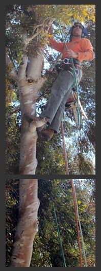 climber_in_tree
