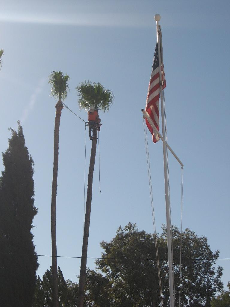 Tall Palms 001